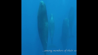 Танец китов. Удивительный подводный мир китов. Дивны творения Божии.