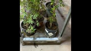обзор экзотических растений 4 октября