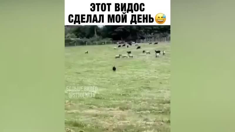Главарь банды Приколы с животными Смешные животные Смех до слез