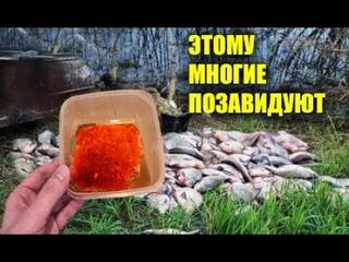 Хотите много рыбы не напрягаясь без сетей? Проверено-работает! Масло для рыбалки своими руками чудо