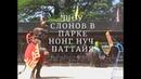 Шоу слонов в парке Нонг Нуч /The Elephants Show in Nong Nooch Tropical Garden