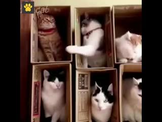 Вредный сосед в коммунальной квартире) -