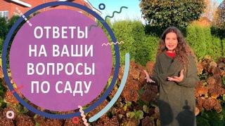"""Ответы на вопросы по саду с гортензиями в КП """"Никольские Озёра"""""""