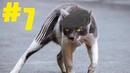 7 Смешные коты 😹 Приколы с кошками 2021 🤣 Смейся до слез 😂 Смешные котики