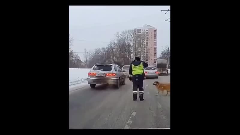 видео бомба