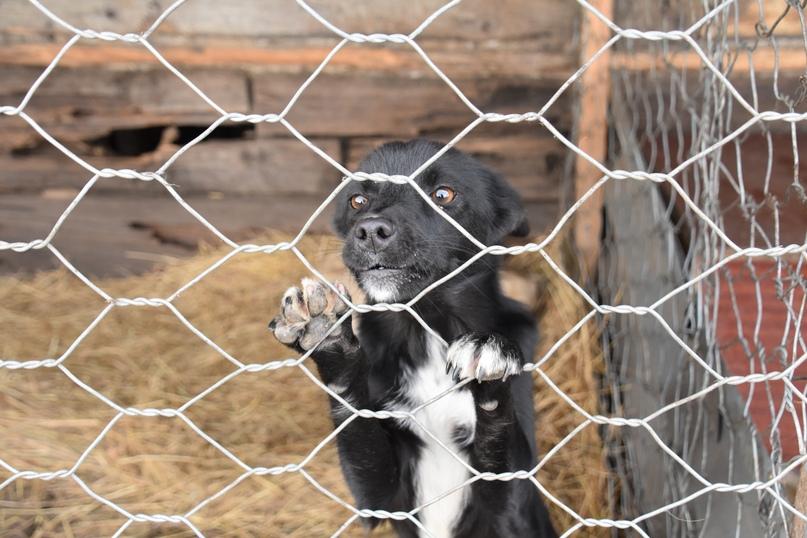Собаки в приюте разные, только глаза у всех одинаковые – печальные