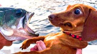 ПРИКОЛЫ С ЖИВОТНЫМИ 😺🐶 Смешные Животные Собаки Смешные Коты Приколы с котами Забавные Животные #100