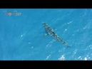 Great White shark gets chased and annoyed by yellowfin tuna! bajamexico
