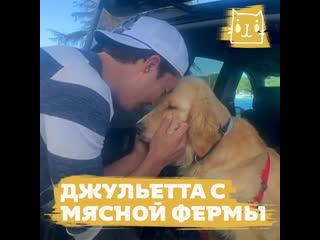 Актер фильма «Люди Икс» спас собаку с мясной фермы