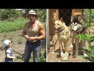 Мои собаки и растения на даче. Хаски. Киви. Хурма. Персики