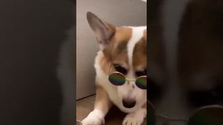 beautiful dog with funny Glasses🕶😁