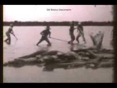 Охота на черных кайманов в Амазонии поздние 1950 е
