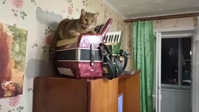 Кузя аккордионист