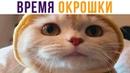 БЮБЮТЬ кошка писала название Приколы с котами Мемозг 703