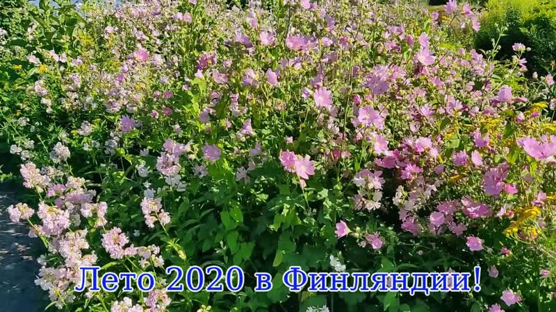 Жаркий июль 2020 в Миккели