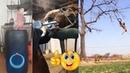Смешные зверушки! Самые прикольные и смешные животные! приколы юмор / funny animals