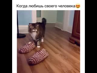 Если бы у меня был такой кот, я бы может и не женился