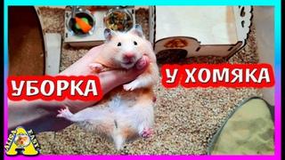 Уборка у хомяков /  Отобрали припасы у ФАННИ / Хомяк умеет писать / Alisa Easy Pets
