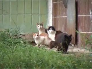 Судя по всему, это крыса-мама защищает своё гнездо с крысятами.