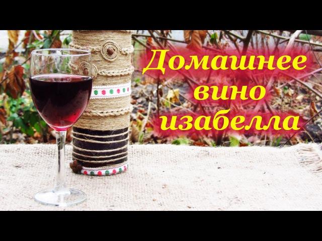 Домашнее вино из винограда изабелла от сбора винограда до дегустации вина