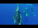 GoPro- OOM - Orcinus Orca Mayotte