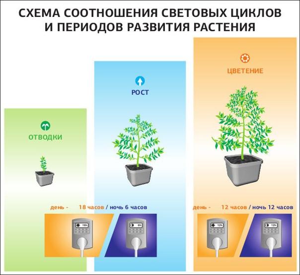 Световой режим для выращивания марихуаны болезни от конопли