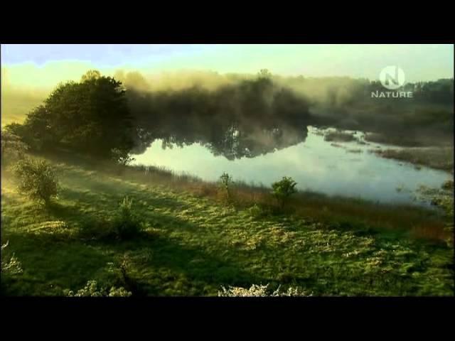 Богемия год среди болот Bohemia A Year in the Wetlands