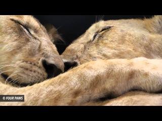 10 невероятных примеров дружбы у животных. I Vam Nauka.