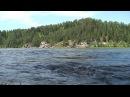 Звуки природы Журчание чистой горной реки верховье Бии Алтай