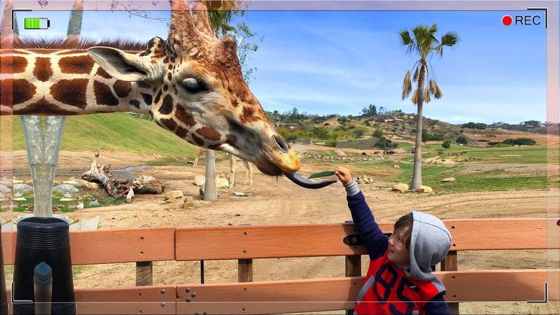 Это НАДО видеть Самый КРУТОЙ Зоопарк в МИРЕ Сан Диего Как в Дикой Природе Кормим животных