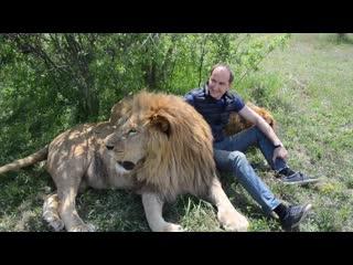ПОВЕЗЛО !Между двумя главными львами! Туристы потеряли деньги !