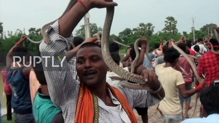 Hundreds of snakes paraded in Indian city of Samastipur as part of Hindu ritual