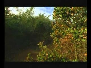 Fox racing ChainSmoke 2 mtb (2001) [mtb full movie]