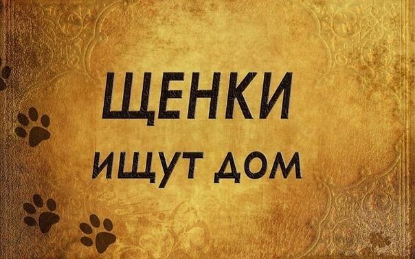 #ищу_дом@vmestepnz_animals Щенки ищет дом  Город: Пенза