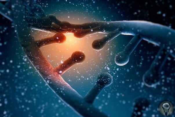ДНК всех земных видов имеет внеземное происхождение.