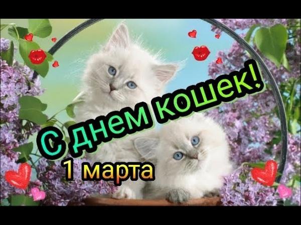 С первым днём весны С днём кошек 1 марта З початком весни 1 березня