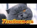 Смешные животные.Кошки.Позитив.Создай себе хорошее настроение