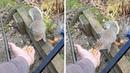 Cheeky Squirrel Bites Fisherman's Finger