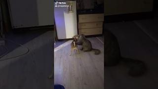 Пёс и кот 🐱 Когда спалили, что ты снимаешь, веселое видео с животными, оуноу, смотреть всем, топ рек