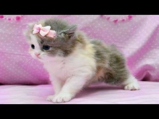 Super cute kittens || Worlds most Cute and Funny Kittens || Part 6