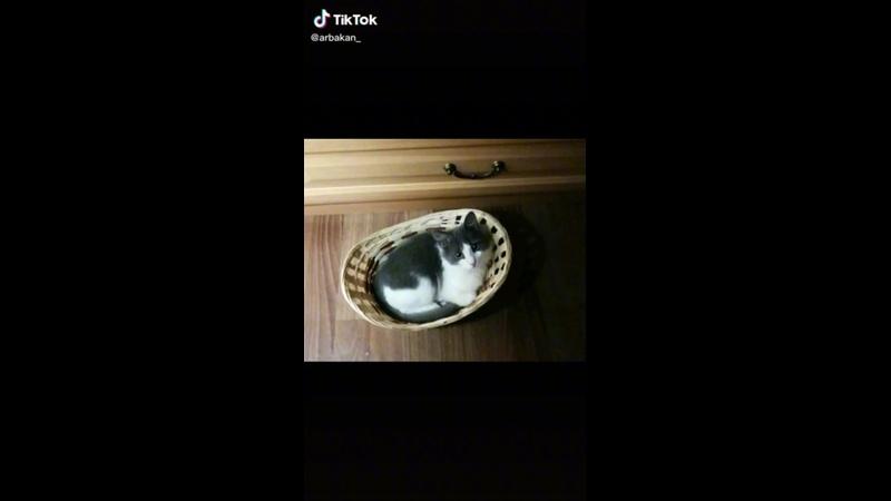 Привет от котёнка из леса❤️