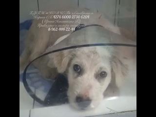 Видео от Ковчег (волонтёрская группа помощи животным)