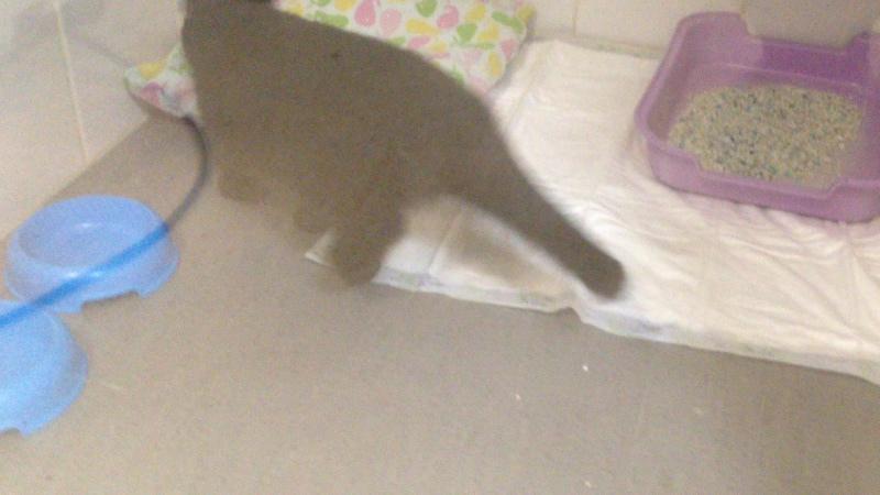 Кошечка Виктория в боксе инфекционного стационара клиники Ветпойнт