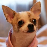 Личная фотография Dimetriya-Pets Dimetriya