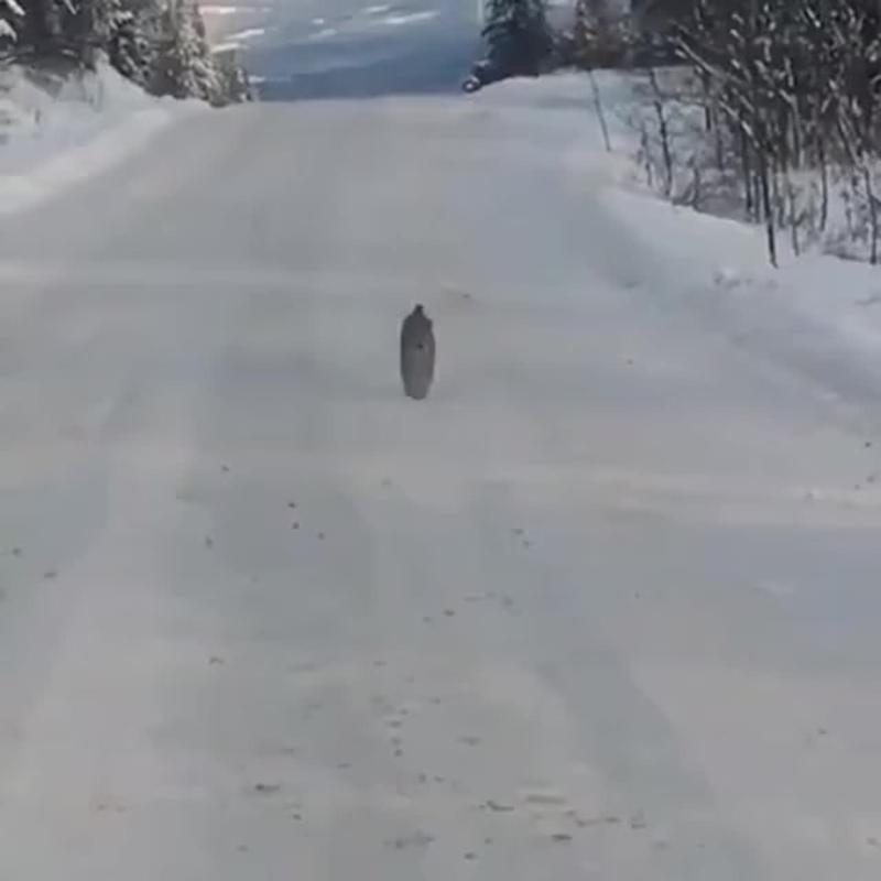 Очень крутая кошка