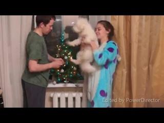 Подготовка в Новому году! Андрей, Каролина и Марк.