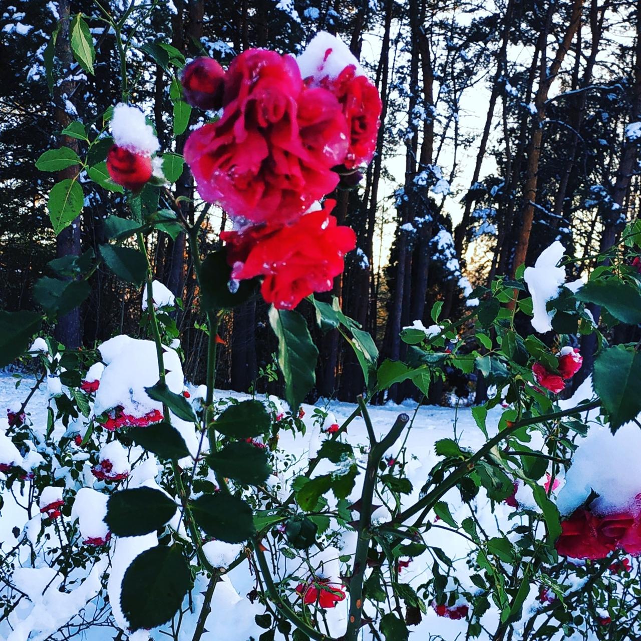 фото из альбома Анны Кошенсковой №3