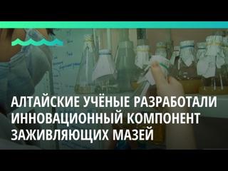 Алтайские учёные разработали инновационный компонент заживляющих мазей