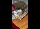 Килгор был тупым котом и гонялся за своим хвостом