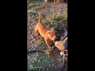Видео от Ольги Аветисян